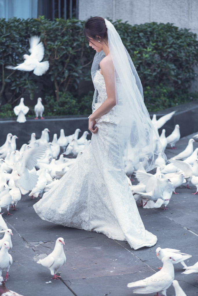 Wedding Portrait of a young chinese bride surrounded by white doves in Chengdu, Sichuan province, China