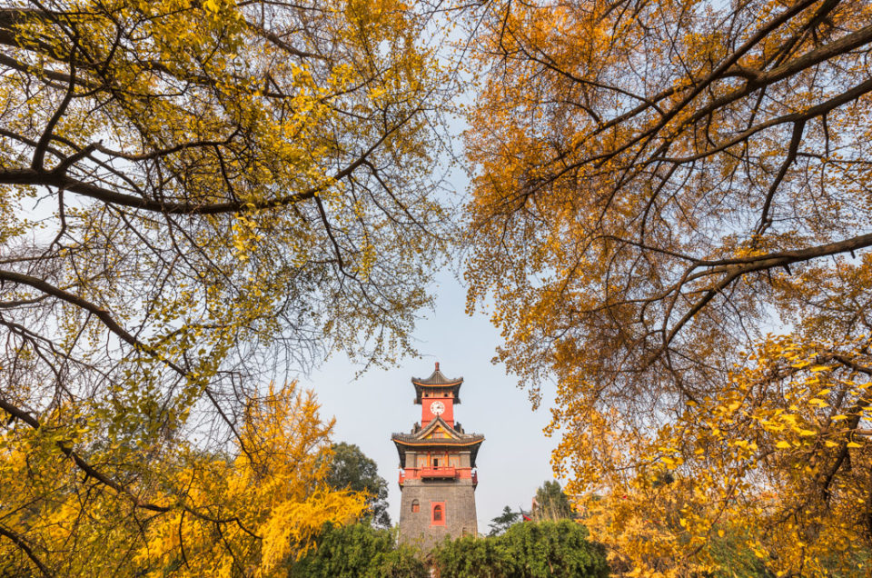 Chengdu, Sichuan province, China - Dec 6, 2016 : Sichuan Huaxi university campus clock tower in autumn with gingko yellow leaves in the trees