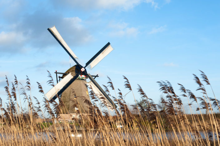 Windmill with wind in the tall grass in Kinderdijk, Netherlands
