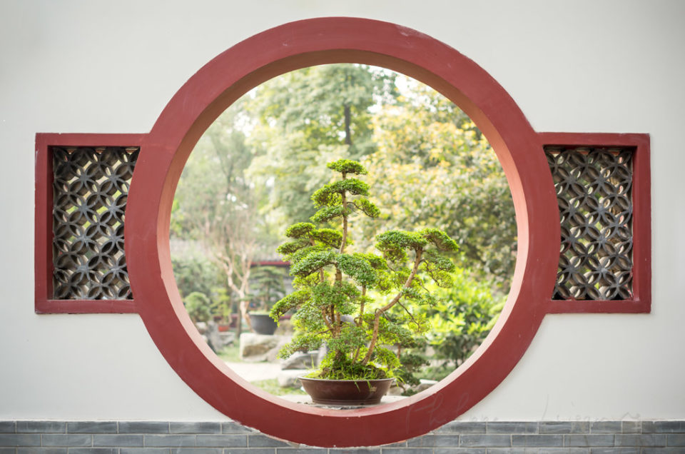Bonsai through a circular traditional chinese window in BaiHuaTan public park, Chengdu, Sichuan Province, China