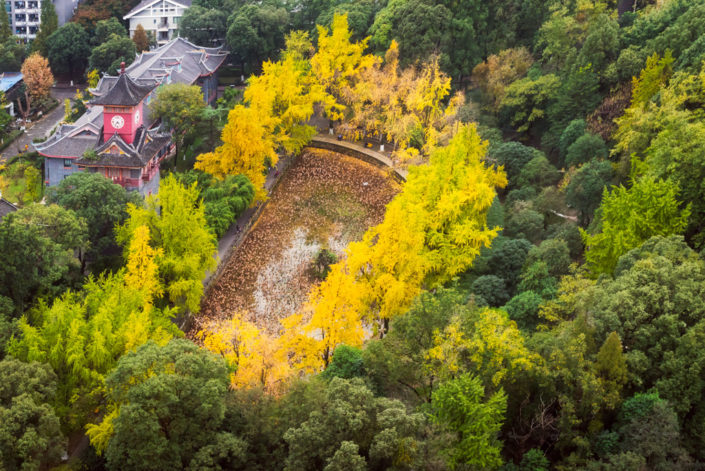 Autumn colors in Huaxi Campus of Sichuan University aerial view - Chengdu, China