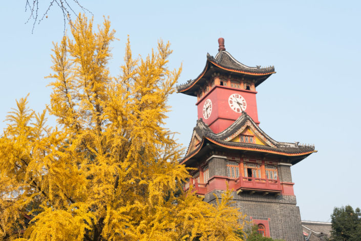 Sichuan Huaxi university campus clock tower in autumn with ginkgo yellow leaves in the trees, Chengdu, Sichuan province, China