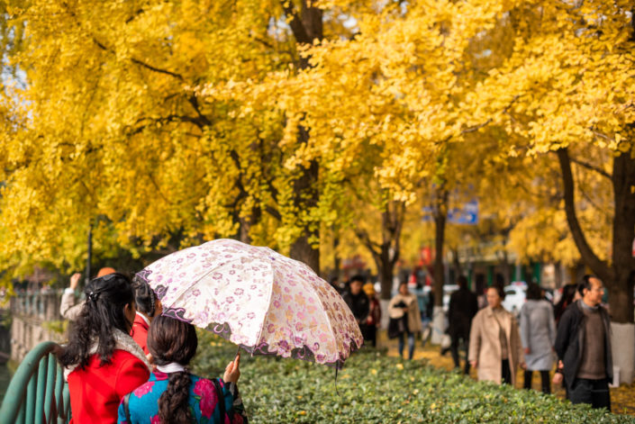 People taking photos of yellow leaves on ginkgo trees by Jinjiang river in Jinli ZhongLu street in Autumn, Chengdu, Sichuan province, China