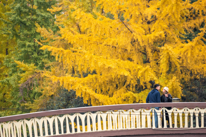 Young couple standing on a bridge by Jinjiang river in Jinli ZhongLu street in autumn with yellow leaves on ginkgo trees in the background, Chengdu, Sichuan province, China