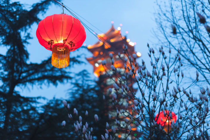 Red chinese lantern hanging in a tree with a pagoda and sky in the background, Chengdu, Sichuan Province, China
