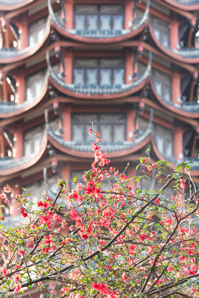 Red flowers in trees with JiuTianLou tower in the background, Tazishan park, Chengdu, China